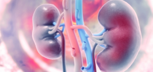 Protein levels in urine are reliable measure of effectiveness in kidney disease research